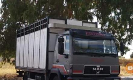 Un empresario de Moraleja se ofrece a trasladar gratis el ganado afectado por los incendios