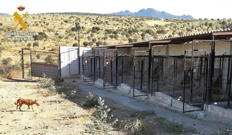 Investigado el propietario de una reala en Puebla de la Reina tras la muerte de una veintena de perros