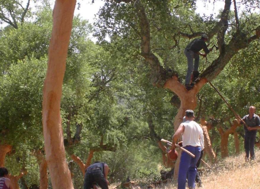 Extremadura figura como la primera en asignación y superficie de derechos de la reserva nacional