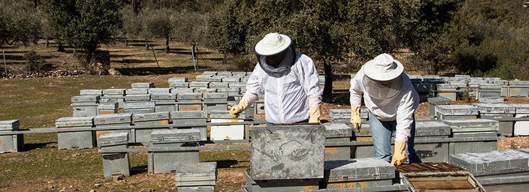 Los apicultores extremeños se enfrentan a uno de su peores años por la varroa y la escasez de miel