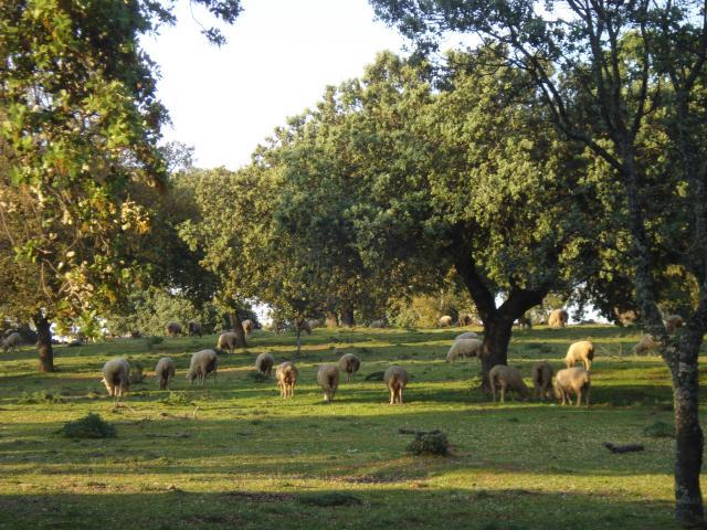 Agricultura regenerará dehesas en Villanueva de la Sierra, Gata, Cilleros y Hernán Pérez