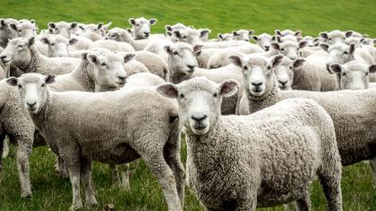 Una base de de datos informará de las ventas de ganado procedente de las fincas de la Diputación de Cáceres