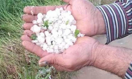 Asaja alerta que el pedrisco ha afectado a 700 hectáreas de cultivo en la zona de Coria