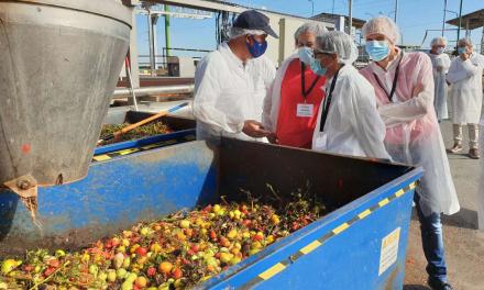 """El tomate sigue siendo el cultivo """"punta de lanza"""" de la exportación extremeña"""