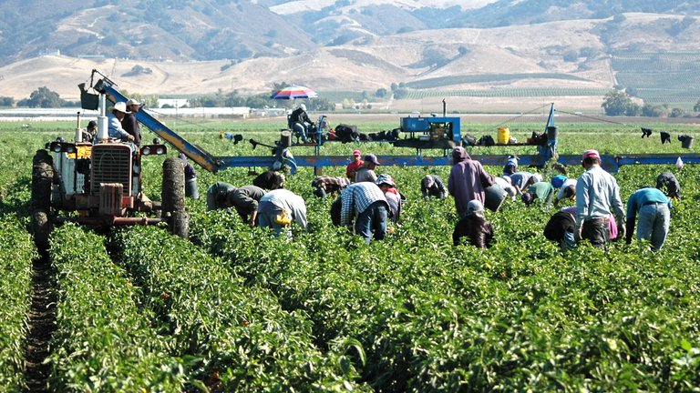 El 24% de los brotes de Covid-19 de España se produce entre trabajadores temporeros del campo