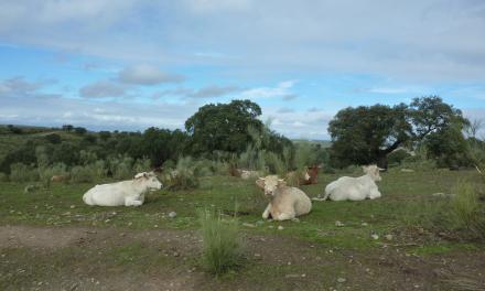 Extremadura impulsa las nuevas tecnologías aplicadas a las explotaciones ganaderas