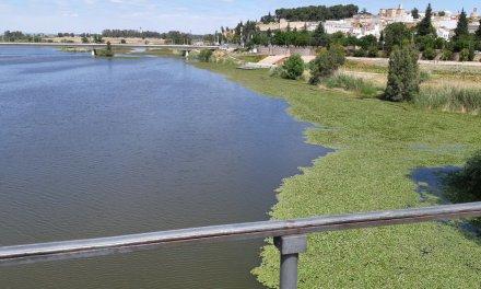 Las ONG ambientales se niegan rotundamente al dragado del río Guadiana