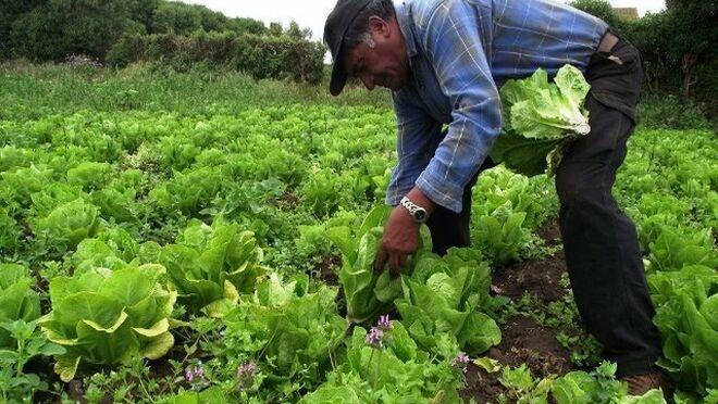 La Junta resuelve la resolución de las solicitudes de agricultor activo a título principal