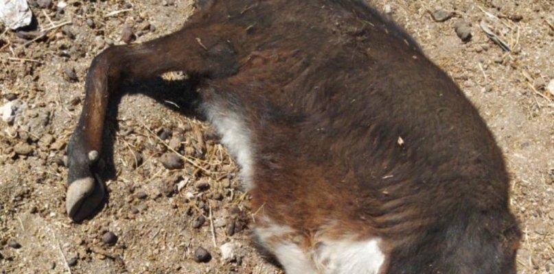 Acusan a cuatro jóvenes de Zarza de la Mayor de un delito de maltrato animal