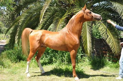 Extremadura ayudará económicamente a la cría, selección y doma de caballos