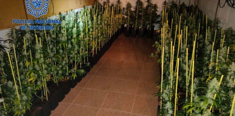 Policía Nacional desmantela una plantación de marihuana en Don Benito