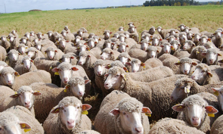 La Consejería de Agricultura ya ha registrado 3.647 solicitudes de la PAC