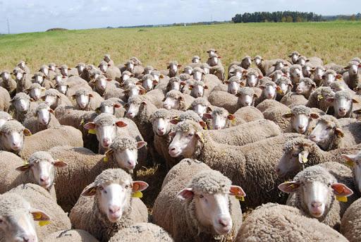 Publicadas las ayudas a explotaciones ovinas y caprinas