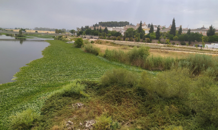 La Asociación Cívica Ciudad de Badajoz pide a CHG  tomar medidas contra las plantas invasoras