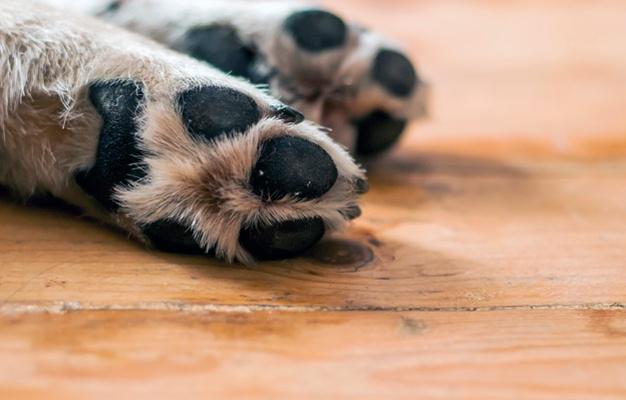 Coria propondrá a la Junta establecer un convenio para crear un centro de acogida de animales domésticos