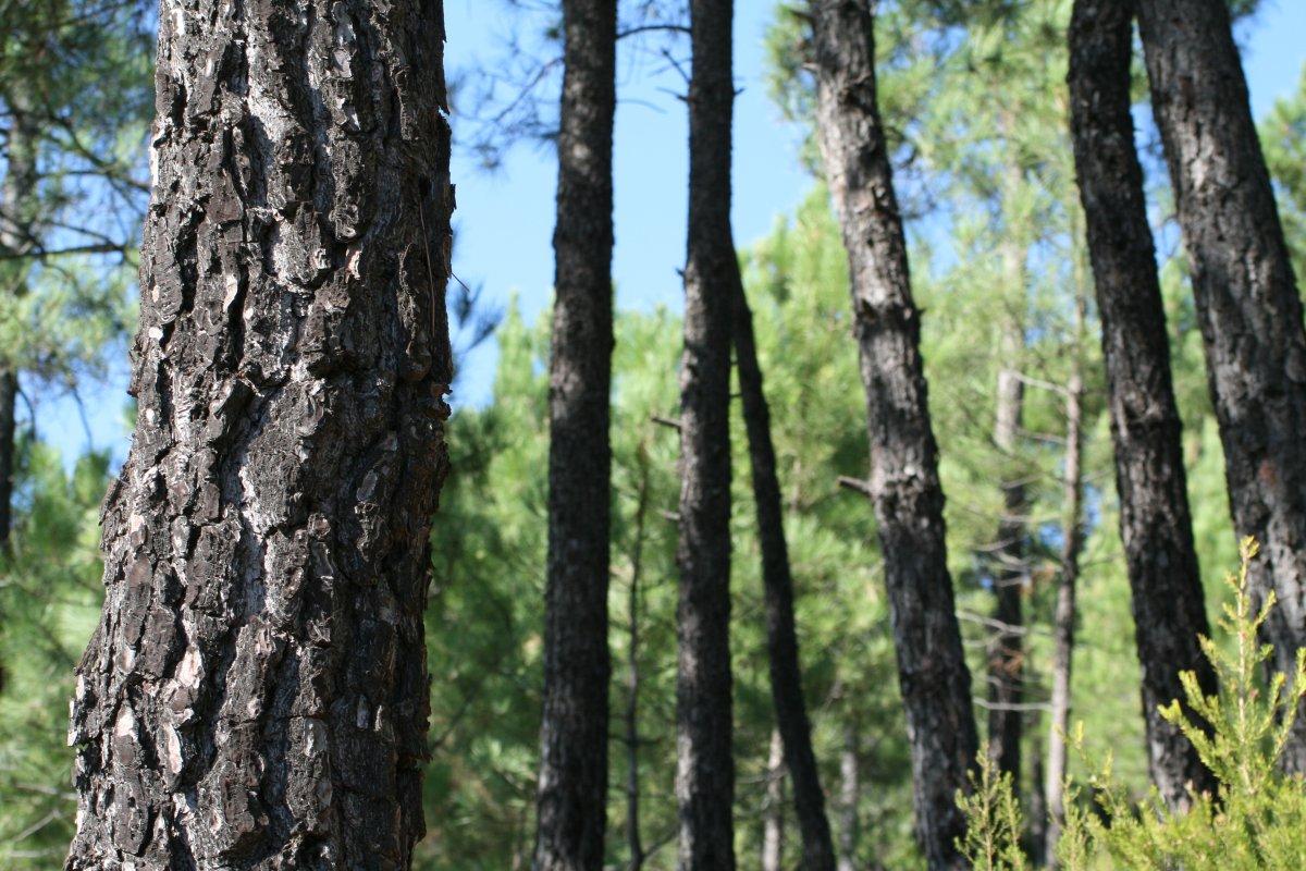 Agricultura destina dos millones de euros para ayudar al sector forestal