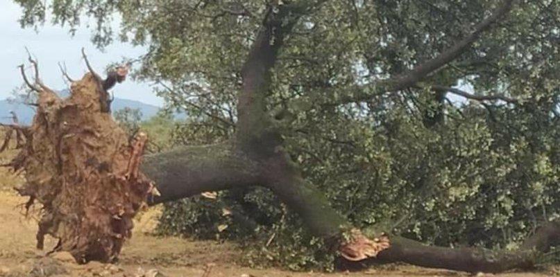 Alerta amarilla por fuertes vientos en el norte de Cáceres, Villuercas, Montánchez y La Siberia