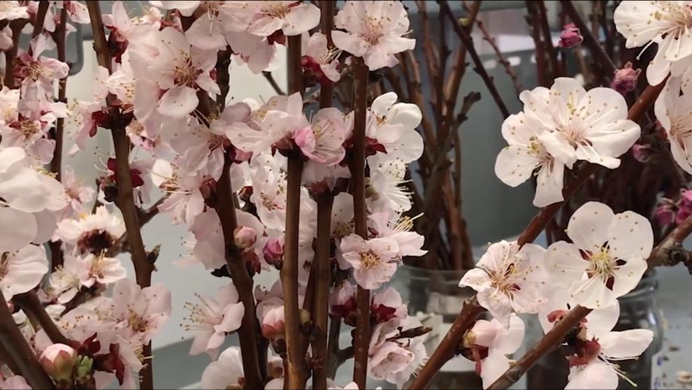 El sector de la flor y planta ornamental ya tiene ayudas económicas