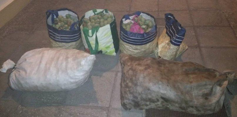 Sorprendidas cuatro personas tras robar 120 kilos de nueces en Pueblonuevo del Guadiana