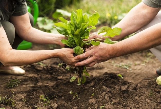 Jóvenes agricultores recibirán ayudas para la creación de empresas agrarias