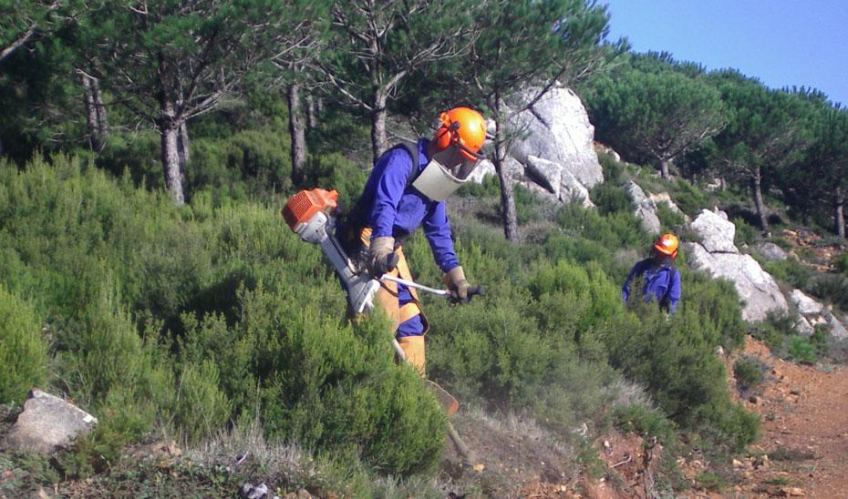 Luz verde para ejecutar trabajos silvícolas en Sierra de Gata, Valle del Jerte y La Vera