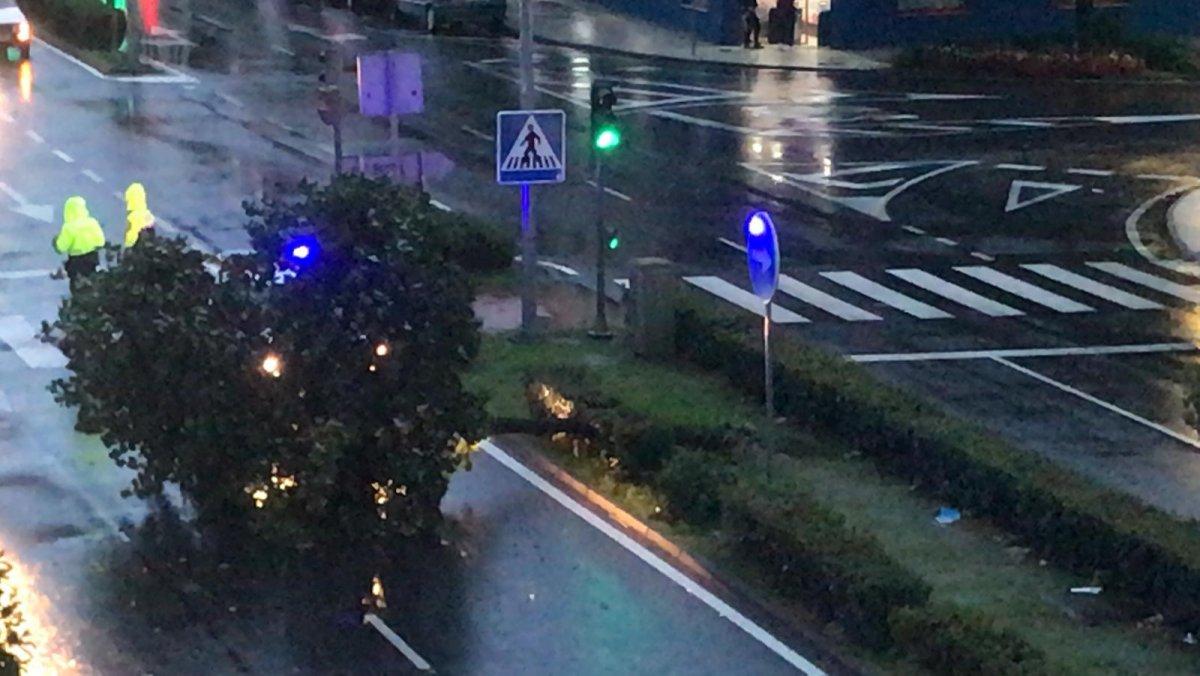 Una fuerte ráfaga de viento derriba un árbol en plena avenida de Moraleja