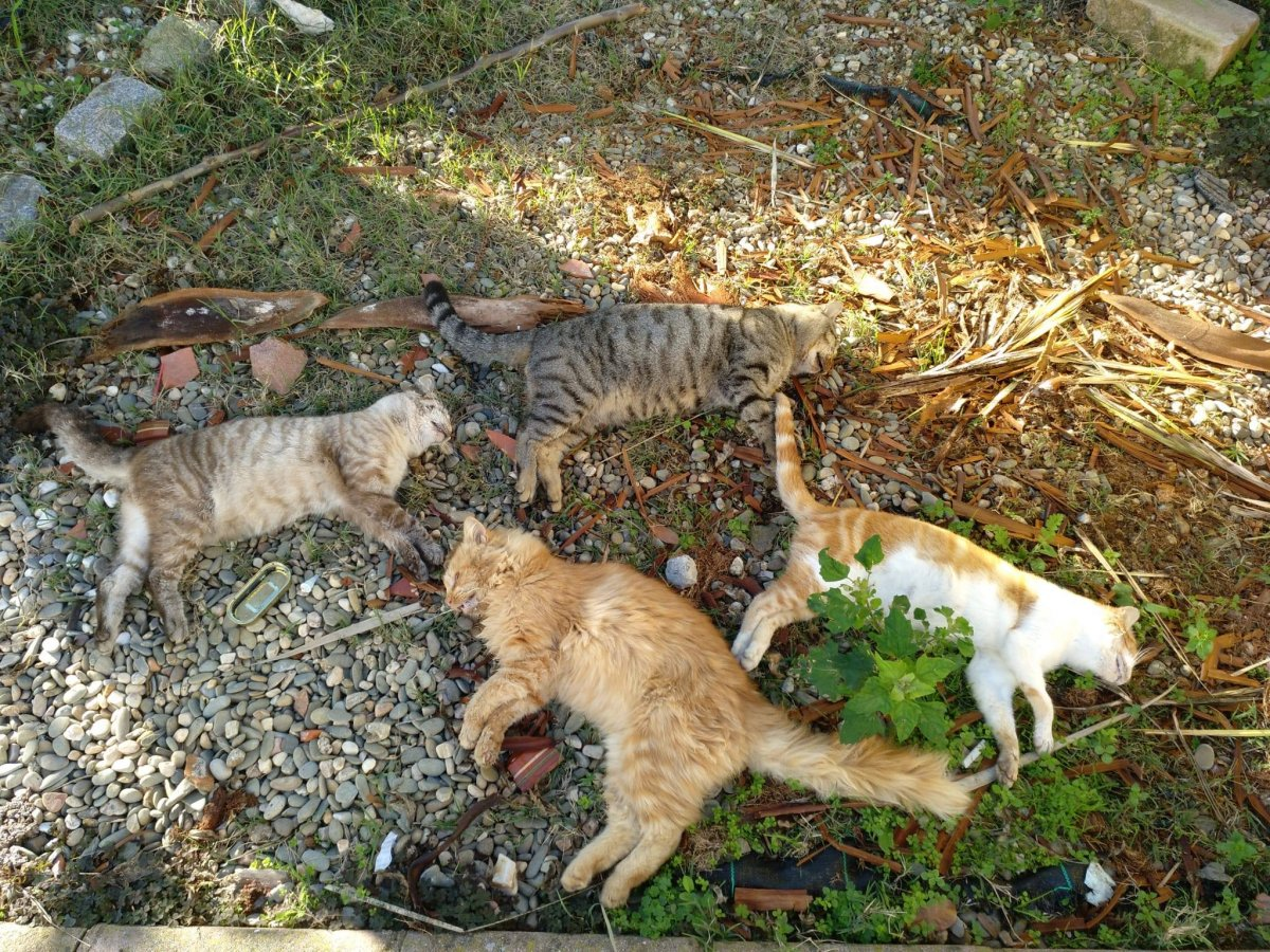 La Guardia Civil investiga el envenenamiento de seis gatos en Montehermoso