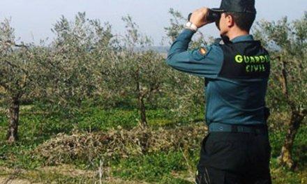 Sorprendidos tres vecinos de Puebla de Obando con 7 aves que acababan de abatir
