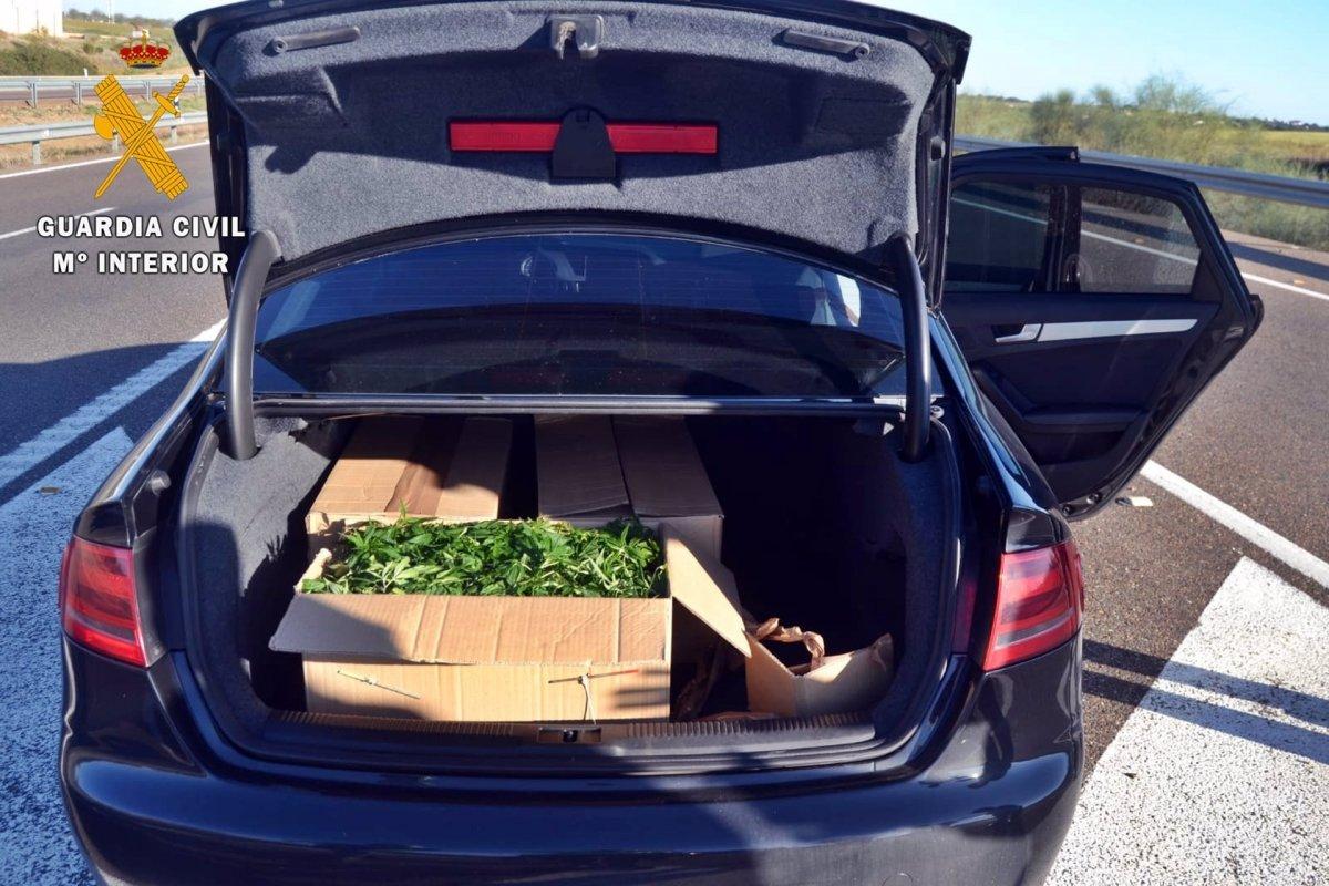 Detenido un vecino de Miajadas por tener más de 1.300 plantones de marihuana en su vehículo