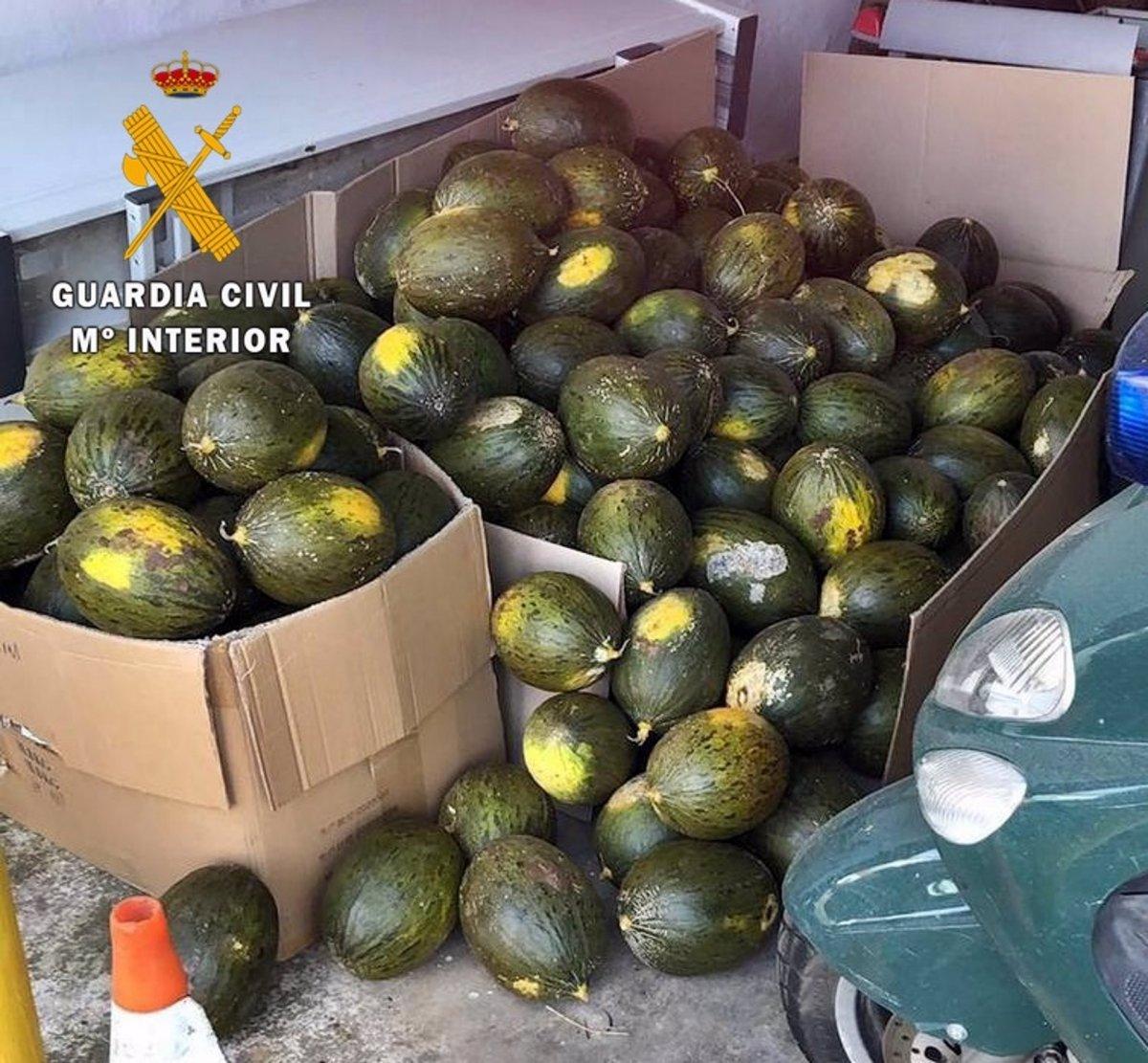 Cinco investigados por robar más de una tonelada de sandías y melones en Guadiana
