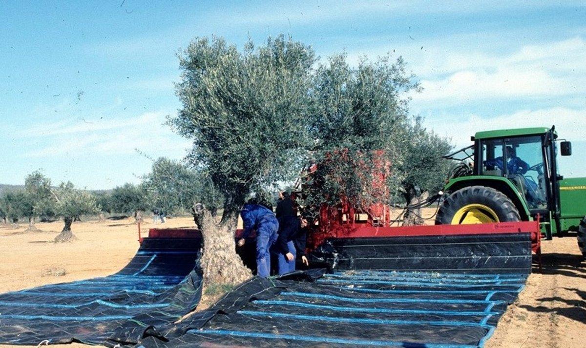 Extremadura abona las ayudas al almacenamiento privado del aceite de oliva