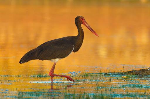 Olivenza acoge este sábado jornadas de sensibilización ornitológica