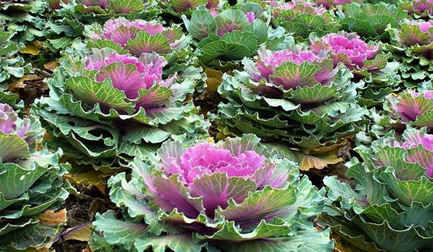 Los municipios de Cáceres decorarán sus jardines con 20.000 plantas ornamentales
