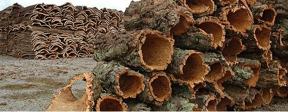 Ayudas para la producción de resina, corcho, piñón, castaña, setas y biomasa