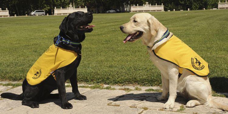 Extremadura otorga el primer carné que une a un perro con una persona discapacitada
