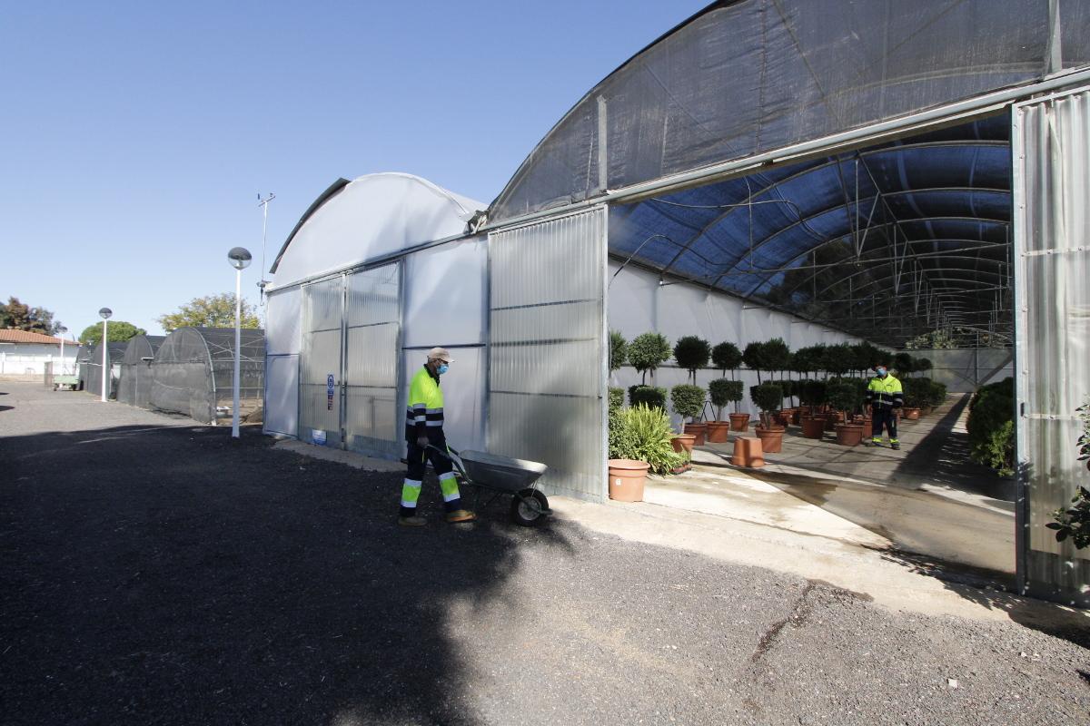 Mérida ofertará 117 puestos de trabajo durante seis meses
