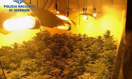 Detenidos dos jóvenes por gestionar una plantación de marihuana en una vivienda de Badajoz
