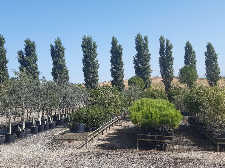 Abierta la campaña de donación de árboles a municipios de menos de 5.000 vecinos