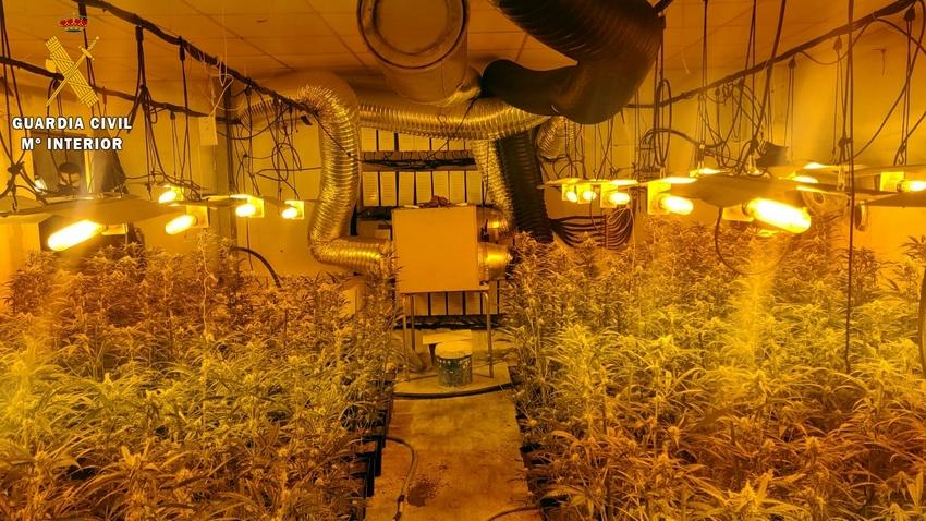 Ingresa en prisión un matrimonio de Hernán Cortés que cultivaba 586 plantas de marihuana