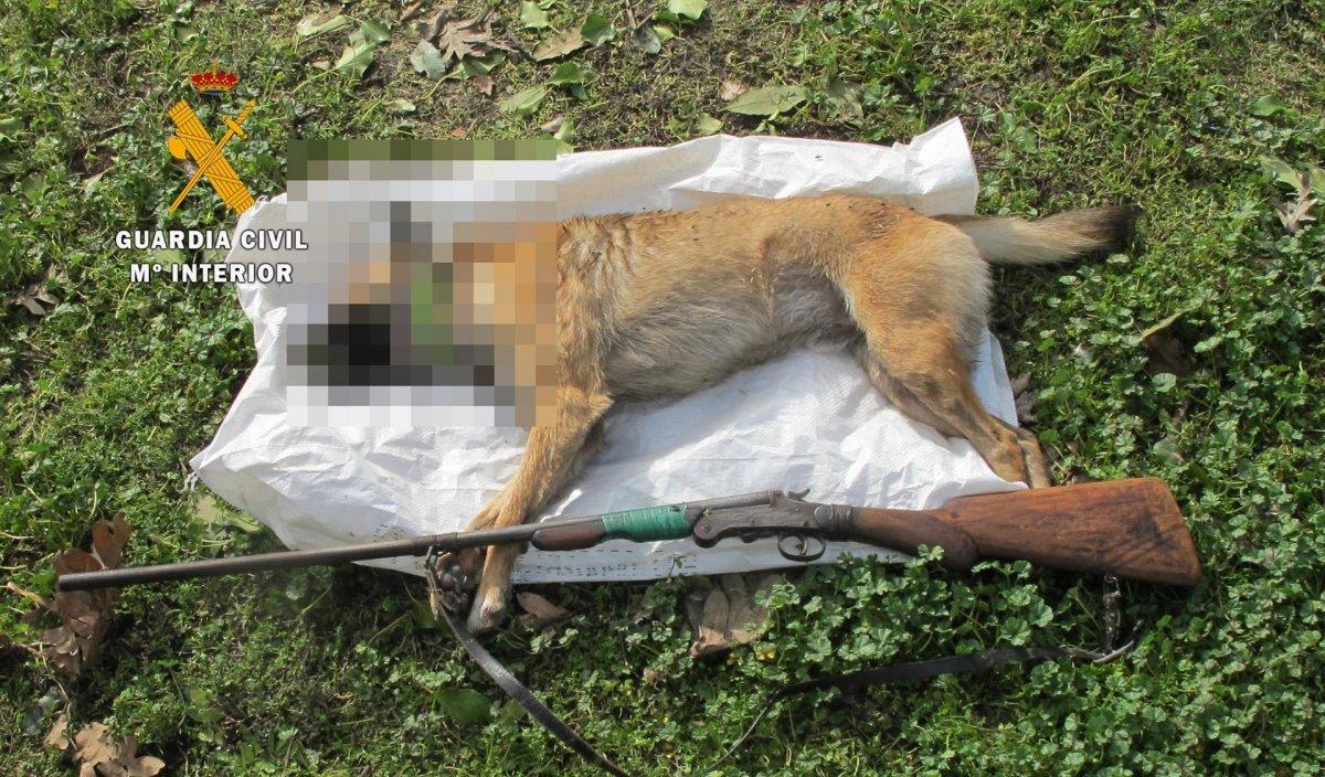 Investigado un vecino de Losar de la Vera por matar de un disparo a un perro
