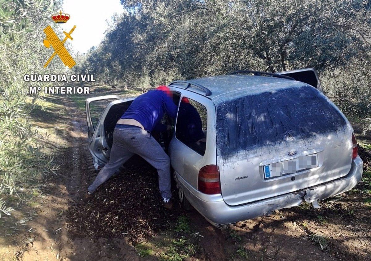 La Guardia Civil intensifica el control en puntos de recepción de aceitunas en Badajoz