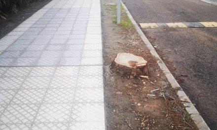 El PSOE pide una planificación arbórea en Badajoz para evitar un talado excesivo