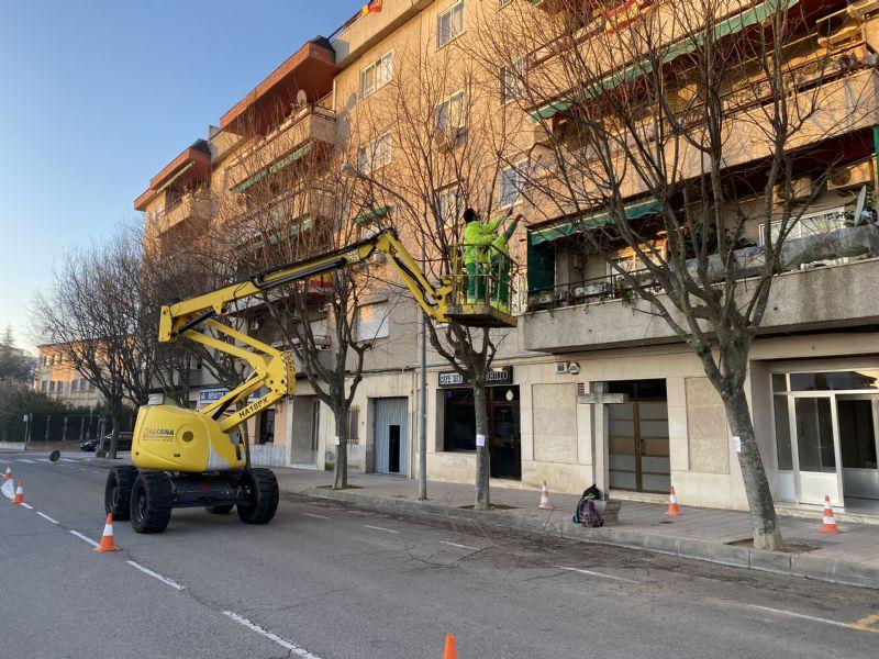 Arranca la poda de árboles en Coria para garantizar el cuidado de parques y jardines