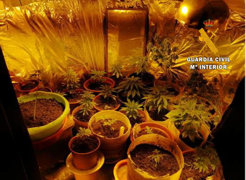 Detenido por plantar marihuana dentro de una vivienda en Hervás