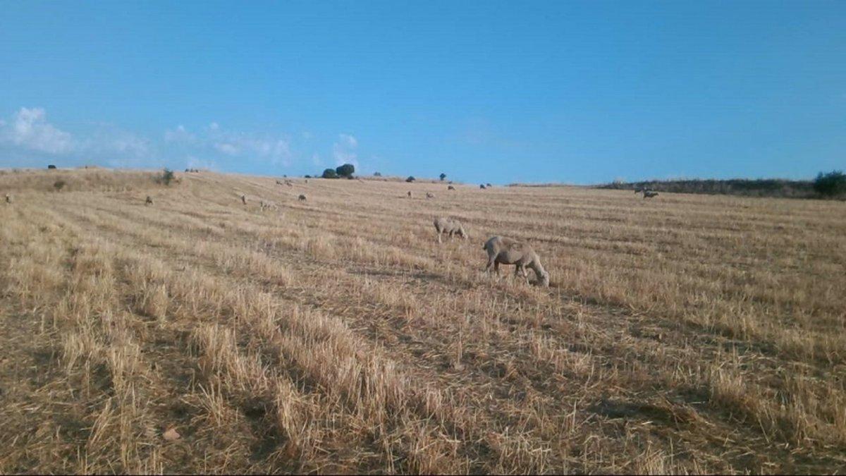 La Junta inicia el procedimiento para autorizar el pastoreo en el monte de Trasierra