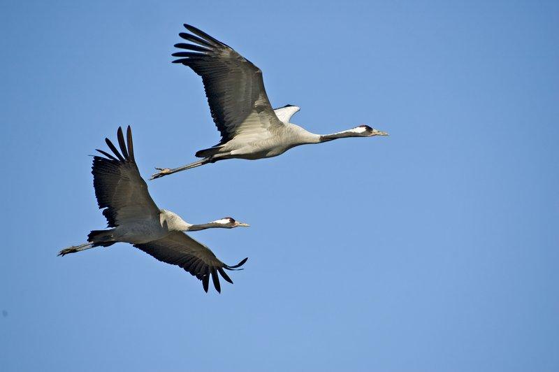 Moraleja impulsará este sábado el turismo ornitológico con varias citas online