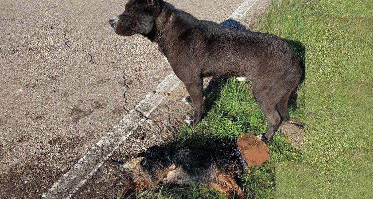 La Guardia Civil rescata dos perros que se habían caído al canal de Orellana