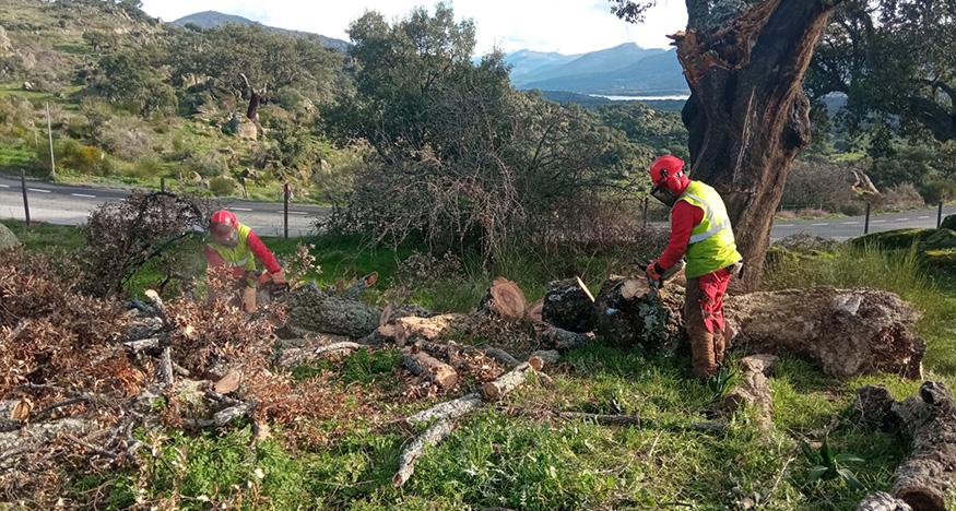 Comienzan los trabajos de reforestación en el monte público Valcorchero de Plasencia