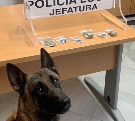 La Unidad Canina de Almendralejo realiza varias incautaciones de droga este fin de semana