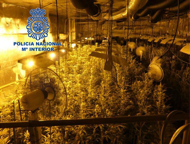 Detenidas 36 personas por tráfico de drogas en Cáceres, Zafra, Salamanca y Toledo